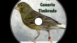 Canto canario timbrado español
