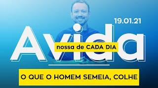 O QUE O HOMEM SEMEIA, COLHE / A vida nossa de cada dia - 19/01/21