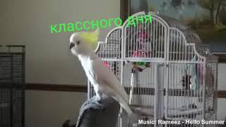 Животные танцуют под музыку😂😂😂😂😂