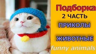 СМЕШНЫЕ животный ПРИКОЛЫ кошак / Funny Animals