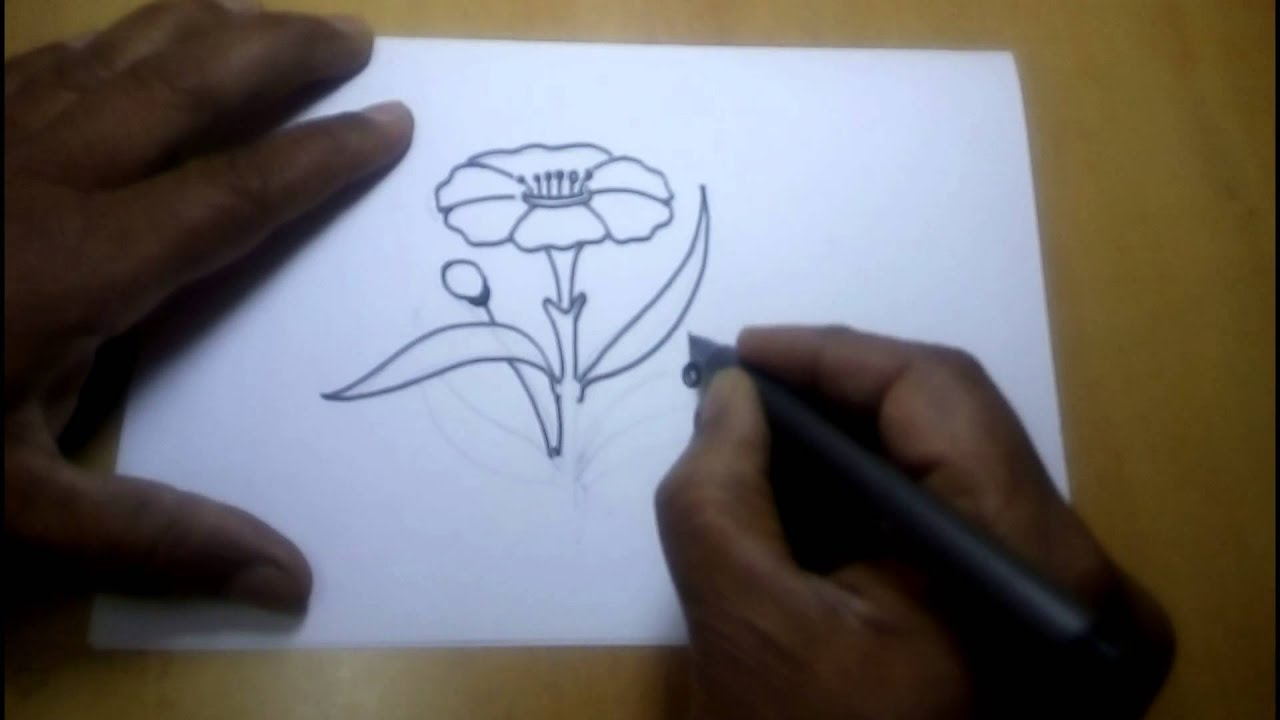 How To Draw Flower Step By Step Free Hand Sketches Youtube