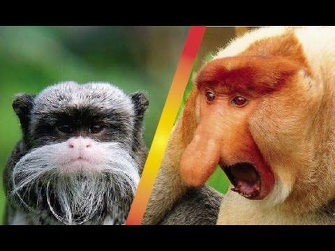 Los Monos Más Extraños Del Mundo Te Sorprenderás Youtube