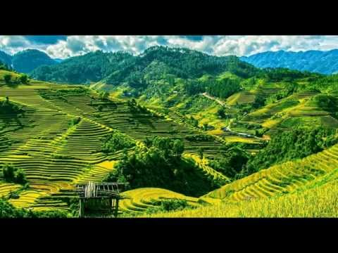 Nature Sounds | Frogs And Birds in Rice Terraces