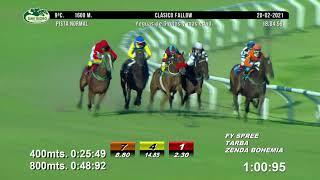 Vidéo de la course PMU PREMIO CLASICO FALLOW