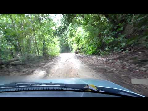 Driving on Christmas Island--watch out for Robber Crabs