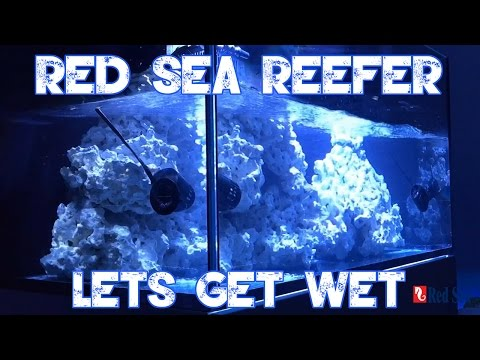 Red Sea Reefer 250   LETS FILL UP THE REEFER   SUMP OVERVIEW