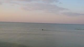 Играющие дельфины / Отдых в Железном Порту(Как хорошо рано утром слушать шум моря, звук волн и смотреть на играющих дельфинов! Отдых в Железном Порту...., 2016-02-22T10:09:10.000Z)