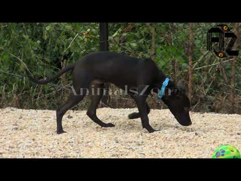 Animals are so funny that you can die | Smarty Dogs | Funny Dog Video Compilation | funny animals