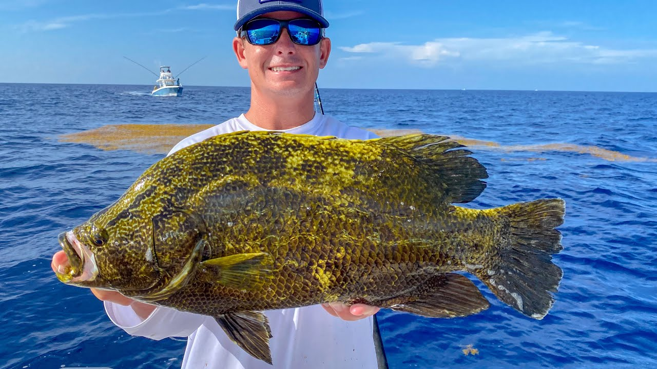 Tripletail & Dolphin! Catch Clean Cook (Deep Sea Fishing Florida)