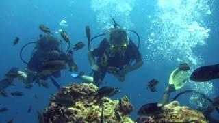 Scuba Diving in the Perhentian Island - Malaysia