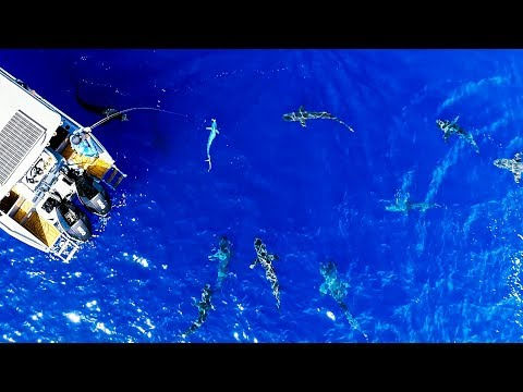 CRAZY SHARK ATTACK FOOTAGE!! Bluewater Spearfishing And Fishing (Mahi Mahi Poke Bowls) - Ep 148