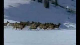 Royksopp- Alpha male (Wolves clip)