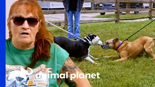 Dog Rescued As A Puppy Reunites With His Best Friend! | Pit Bulls & Parolees