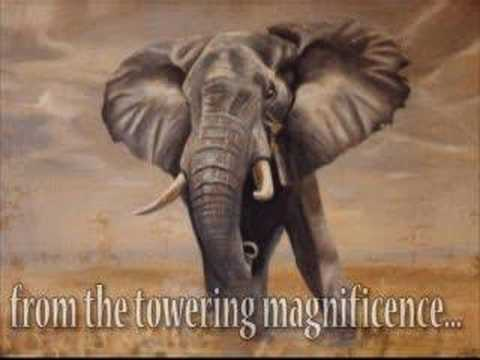 Dugzart.com -South African wildlife paintings by Doug Pithey