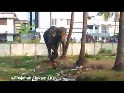 Elephant attack near chavakkad town- Part 1