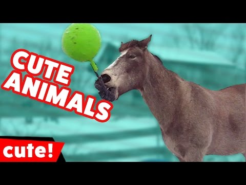 Funniest Animal Moments & Fails November 2016 Weekly Compilation | Kyoot Animals