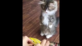 Funny cats #30