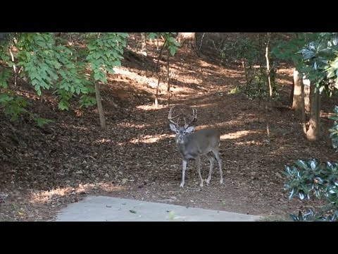 Seek | One - Episode 4 | Atlanta Deer Hunting