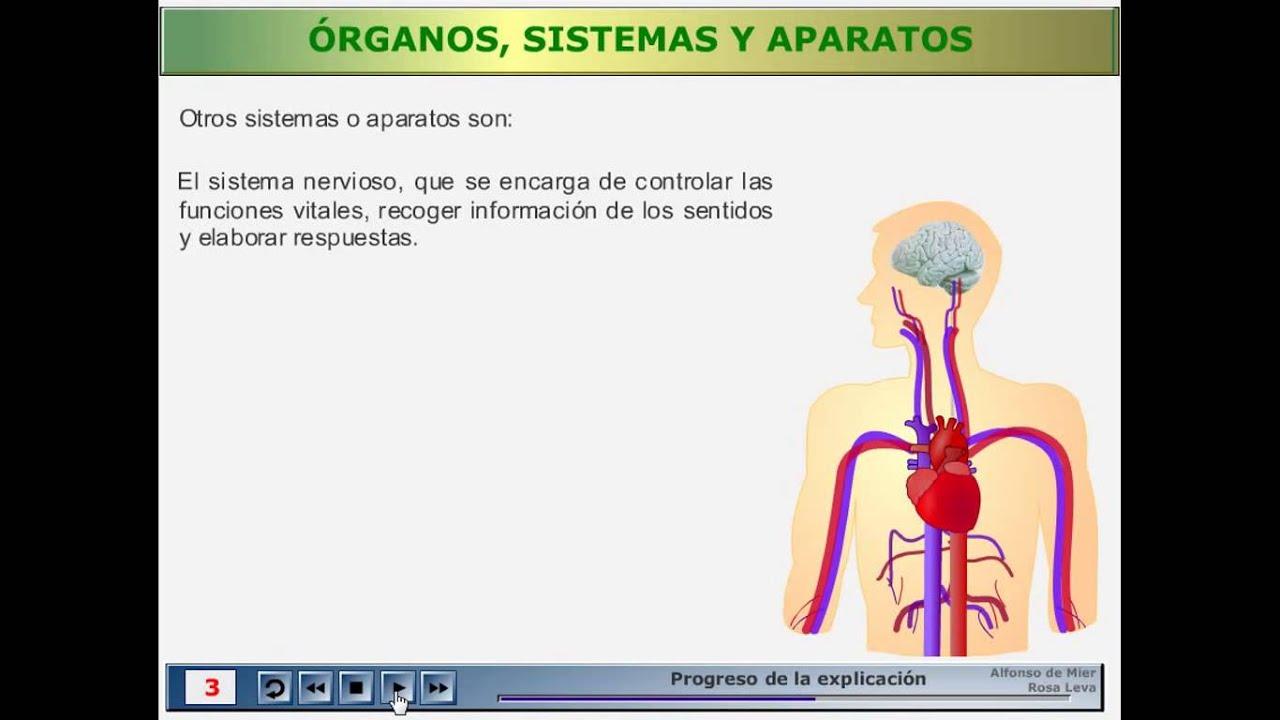 1.4. Órganos, sistemas y aparatos - YouTube
