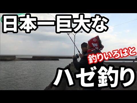 釣りいろはと日本一大きくなるハゼを狙う!