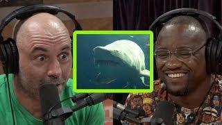 Yves Edwards' Shark Story Freaks Joe Rogan Out
