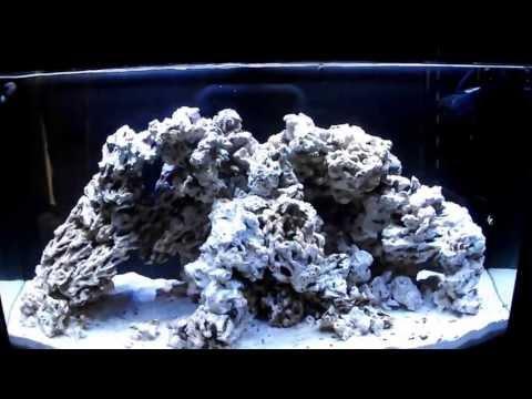 CUC - Update/Story - Nassarius Snails Rock!