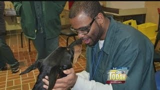 Inmates To Help Train Puppies To Become Guide Dogs