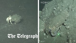 video: Watch: Undersea footage shows marine life covered in ash from Canary Island volcano eruptions