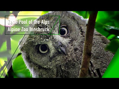 Gene Pools of the Alps - The Secrets of Nature