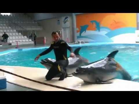 İstanbul Dolphinarium part 3
