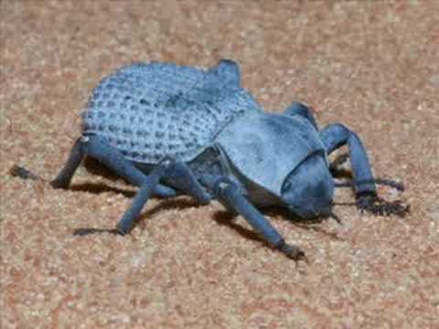 Amazing Bugs You Probably Didn't Know Exist!