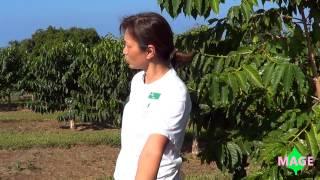 Kona, HI --- Greenwell Farms Coffee