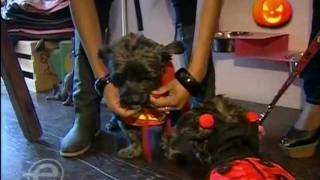 Jully Black from eTalk visits Timmie Doggie Outfitters Thumbnail