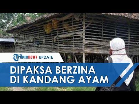 Bocah SMP Dipaksa Berzina di Kandang Ayam hingga Hamil 7 Bulan, Pelaku Saudara Sendiri Usia 50 Tahun