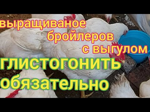Вопрос: Что будет с курицей если она сьест глистов?