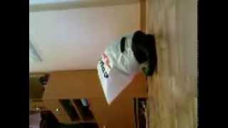 Кот   извращенец. Ужасы синтетической жизни. Смотри!(Смешные приколы про кошек! смотреть приколы про кошек, кошки приколы для детей, кошки видео приколы для..., 2015-05-17T07:29:40.000Z)