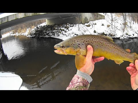 Wisconsin Trout Fishing 2/2/2019