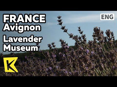 【K】France Travel-Avignon[프랑스 여행-아비뇽]지중해에서 온 꽃, 라벤더 박물관/Lavender Museum/Flower/Extraction/Shop
