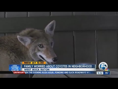 Family worried about coyotes in neighborhood