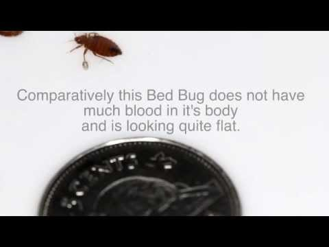 Bed Bug, Carpenter Ant and a 5 cents Coin