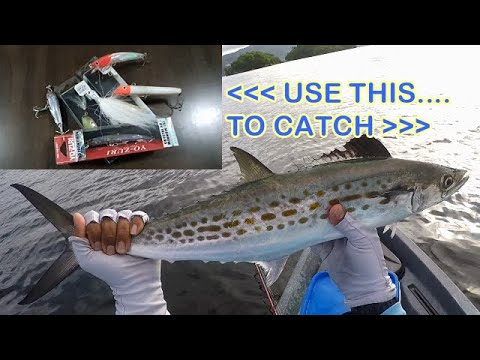 BEST LURES For SPANISH MACKEREL - When & How To Use Artificial Baits To Catch More Fish!