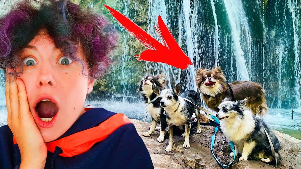 Кошка и собаки едут на ВОДОПАД впервые! Реакция, с собаками на море, новый дом с бассейном - ДЕНЬ 4