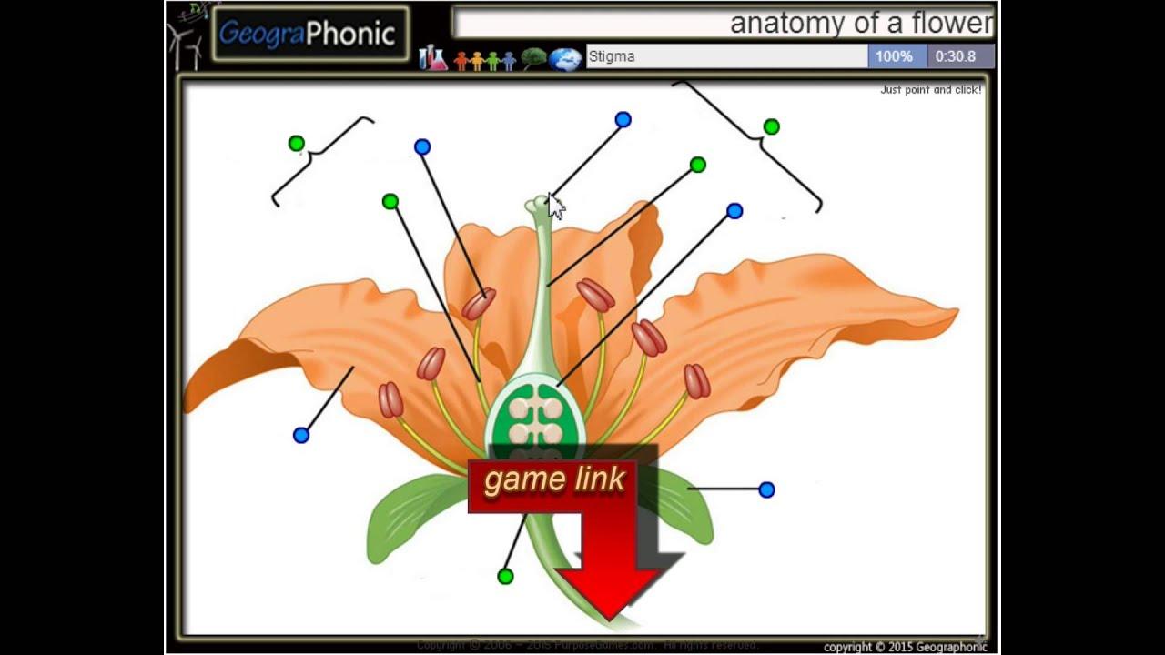 Anatomía de una flor, estambre, filamento, anteras, el estigma ...
