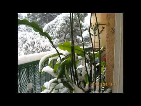ĐÊM ĐÔNG T² / Nguyễn văn Thương / Lệ Thu / bão tuyết ở Pháp 2009