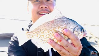 HOT California Surf Perch Fishing of 2020 IT WAS FIRE