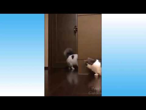 Dogs mating and penis stucks    cute cats and dogs compilations