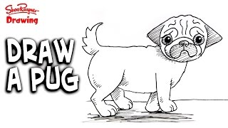 How to draw a pug - Easy step-by-step for beginners