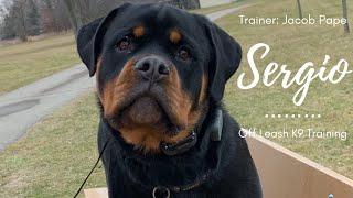 "Rottweiler l ""Sergio"" l Amazing Obedience l Off Leash K9 Training"