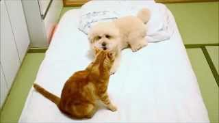 関連記事:http://bonpoodle.blog117.fc2.com/blog-entry-1869.html 布...