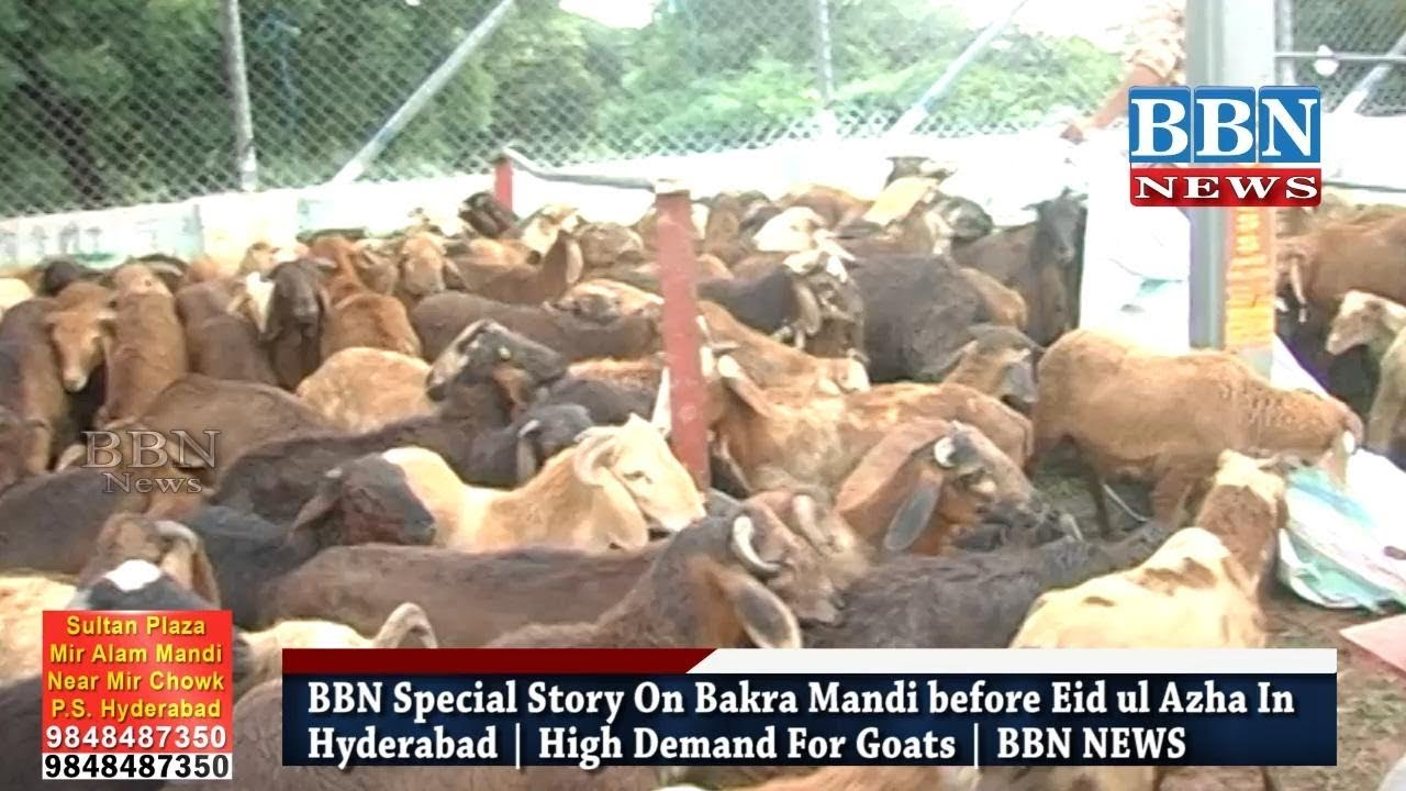 Bakra Mandi In Hyderabad 2017 | High Demand For Goats Before Eid ul Azha |  | Special Report BBN NEWS